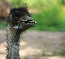 I'll Never Find Another EMU by CarynEmilie