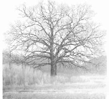 Oak tree drawing by Mike Theuer