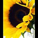 sunflower by Angel Warda