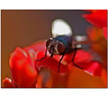 Fly In The Ointment Photographic Print