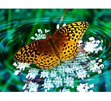 Little Flutterby Photographic Print