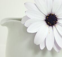 Daisy in a Milk Jug by Penelope Thomas