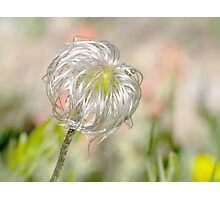 Do you know this wildflower? Photographic Print