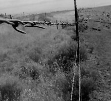 Barbwire by simpleasme