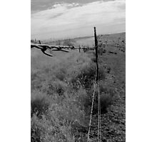 Barbwire Photographic Print