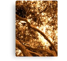 Composition With Branches and Foliage in Sepia  Canvas Print