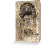 Humorous Mating Tortoises Greeting Card