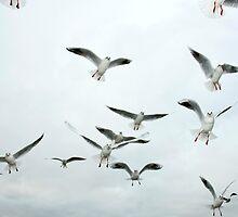 The Birds by baddoggy