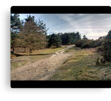 Up to Gills Lap, Ashdown Forest, Sussex Canvas Print