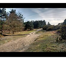 Up to Gills Lap, Ashdown Forest, Sussex Photographic Print