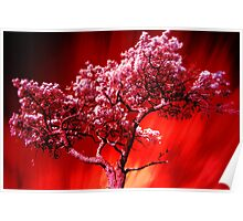Flame Tree Poster