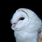 Barn Owl by laurav
