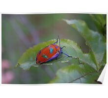 Little Red Bug Poster