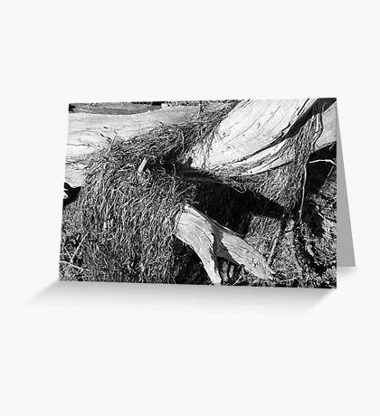 Driftwood Sculpture Greeting Card