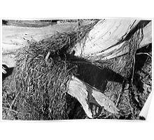 Driftwood Sculpture Poster