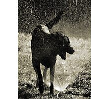 Rufus at Play Photographic Print