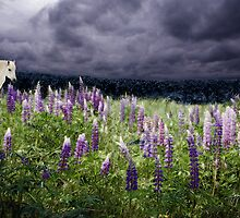 A Childs Dream of Lupine Fields by Wayne King