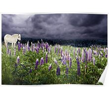 A Childs Dream of Lupine Fields Poster