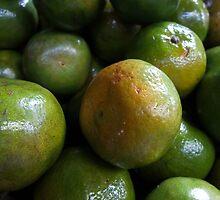 Citrus by Dave Lloyd