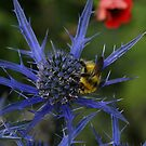 Bee on a Thistle 2 by Mike Butchart