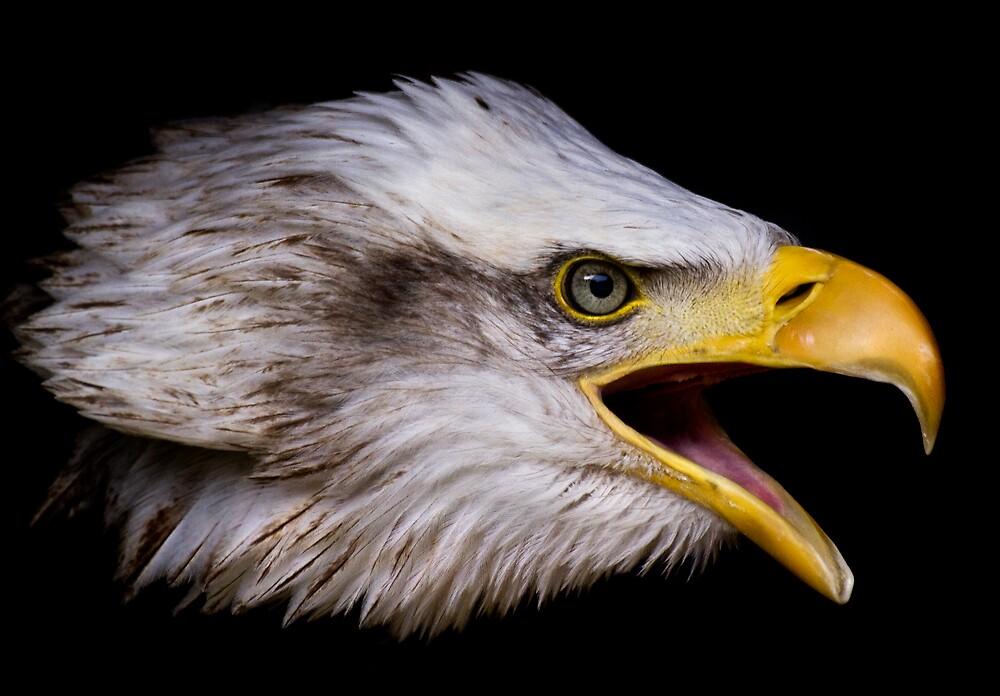 Liberty Eagle by igotmeacanon
