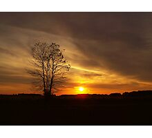 Sunset at the Dog Park Photographic Print