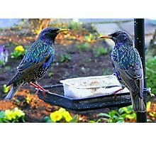 Two Starlings Photographic Print