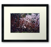 Sakura Branch Blossoming Out  Framed Print