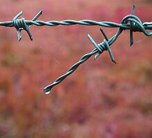 Water droplet on barbed wire by Pete Simmonds