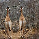 DIGITAL IDENTICAL TWINS - THE GIRAFFE - Camelopardalis (KAMEELPERD) by Magriet Meintjes