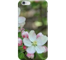 Blushing Apple Blossoms iPhone Case/Skin
