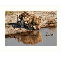 Leopard Reflection 2 - Okavango Delta, Botswana Art Print