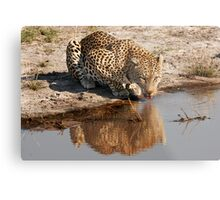Leopard Reflection 2 - Okavango Delta, Botswana Metal Print
