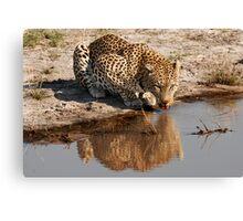 Leopard Reflection 2 - Okavango Delta, Botswana Canvas Print