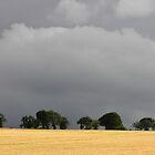 Corn Field Under Promise of Rain by Lynn Ede