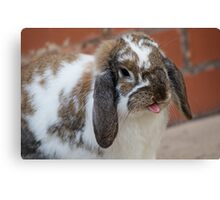 Rabbit Silly  Canvas Print