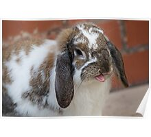 Rabbit Silly  Poster