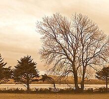 Trees In Sepia......................................Most Products by Fara