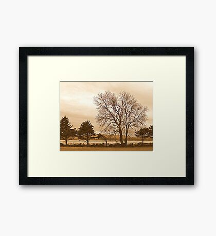 Trees In Sepia......................................Most Products Framed Print