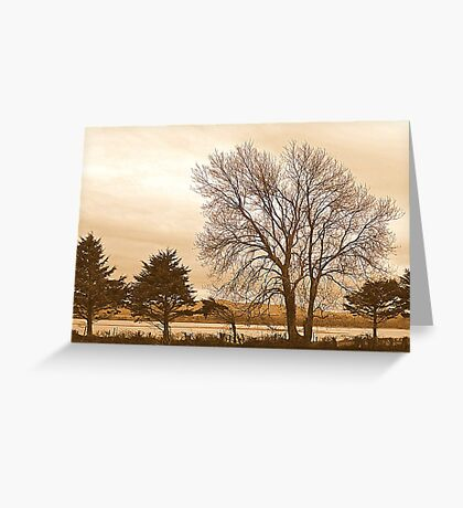 Trees In Sepia......................................Most Products Greeting Card