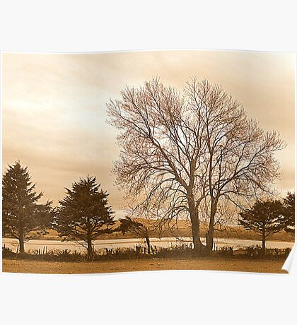 Trees In Sepia......................................Most Products Poster