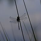 Reflecting Wings  by AnnieSnel