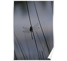 Reflecting Wings  Poster