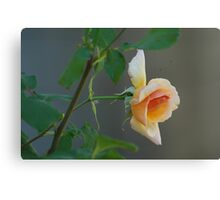 Tuesday Rose Canvas Print