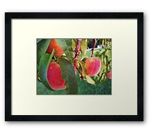 Peach Tree Framed Print