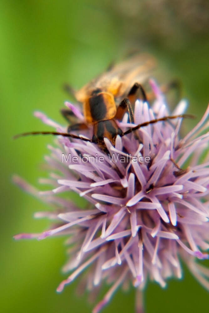 Stop to Smell the Flower by Melonie Wallace