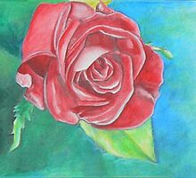 Rose Study by Jacqui Coote