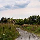 Prairie Path by Melonie Wallace