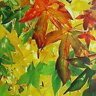 Autumn Light and Colour  by Heidi Schwandt Garner