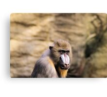 Who is looking at who??? Canvas Print